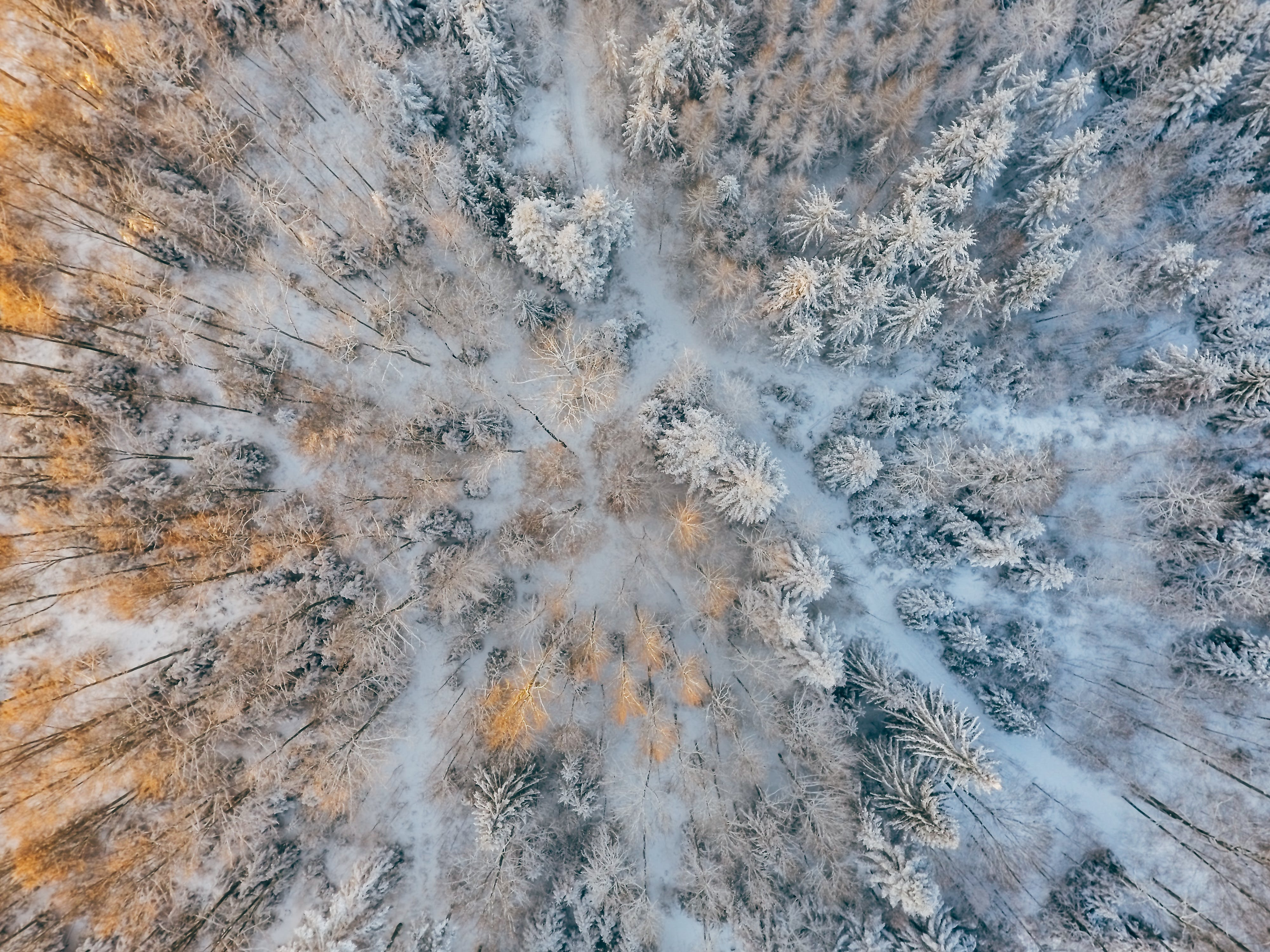 Aerial Photography of Trees