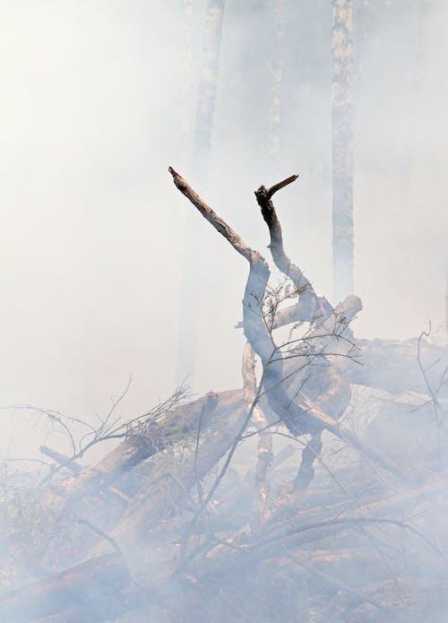 Photos gratuites de arbres, beau, brûler, charmant