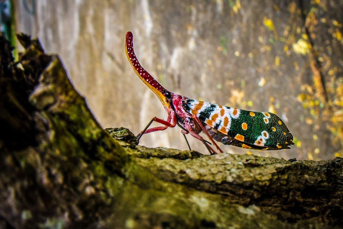 animal, colorit, de colors