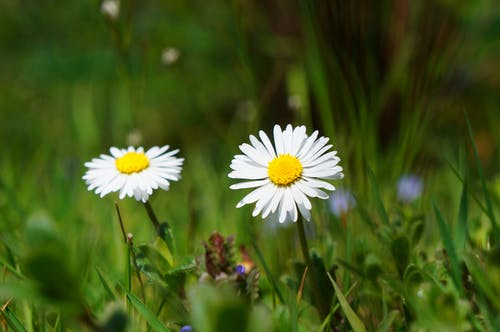 Fotos de stock gratuitas de césped, efecto desenfocado, flora, floración