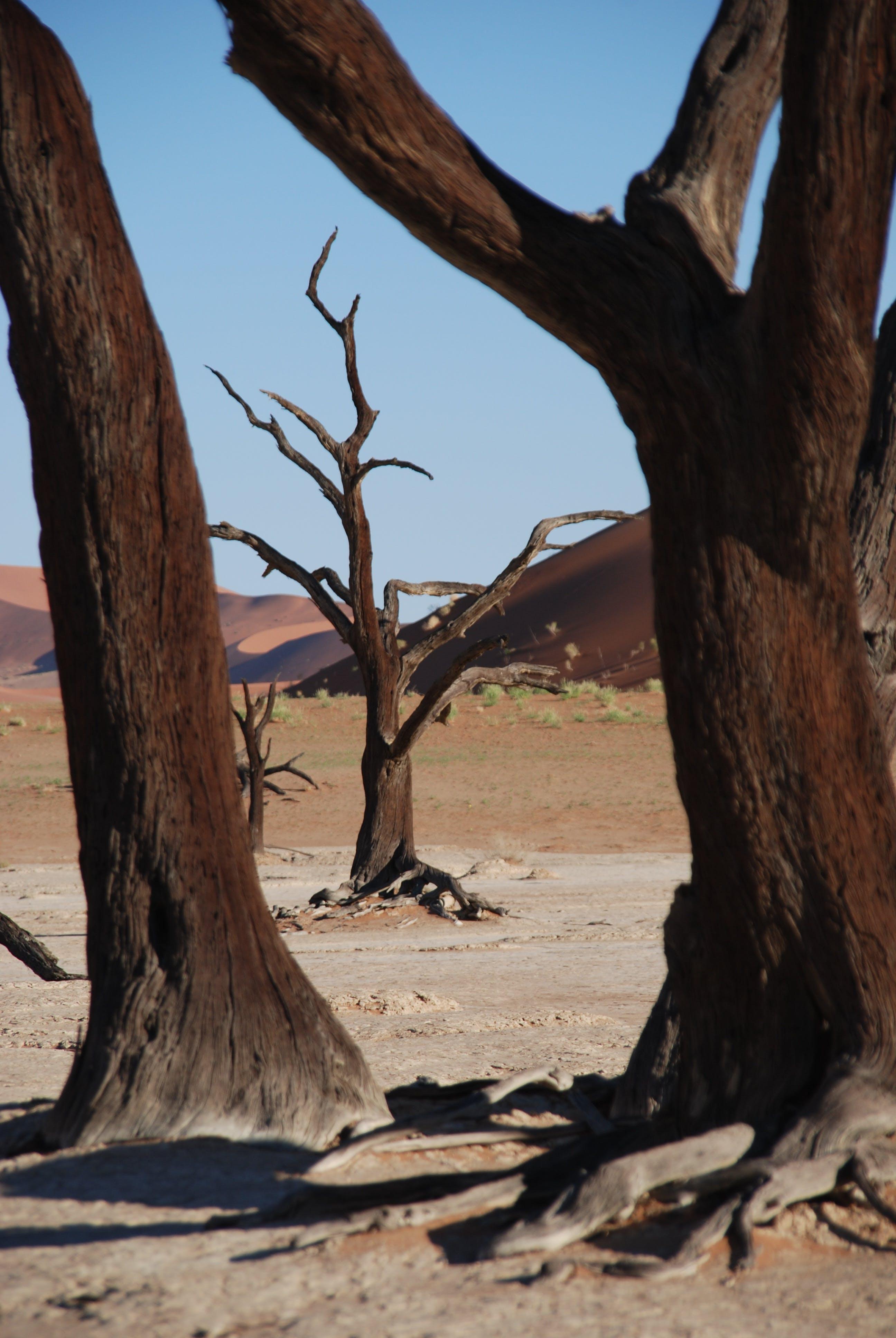 Brown Tree Near Desert during Daytime