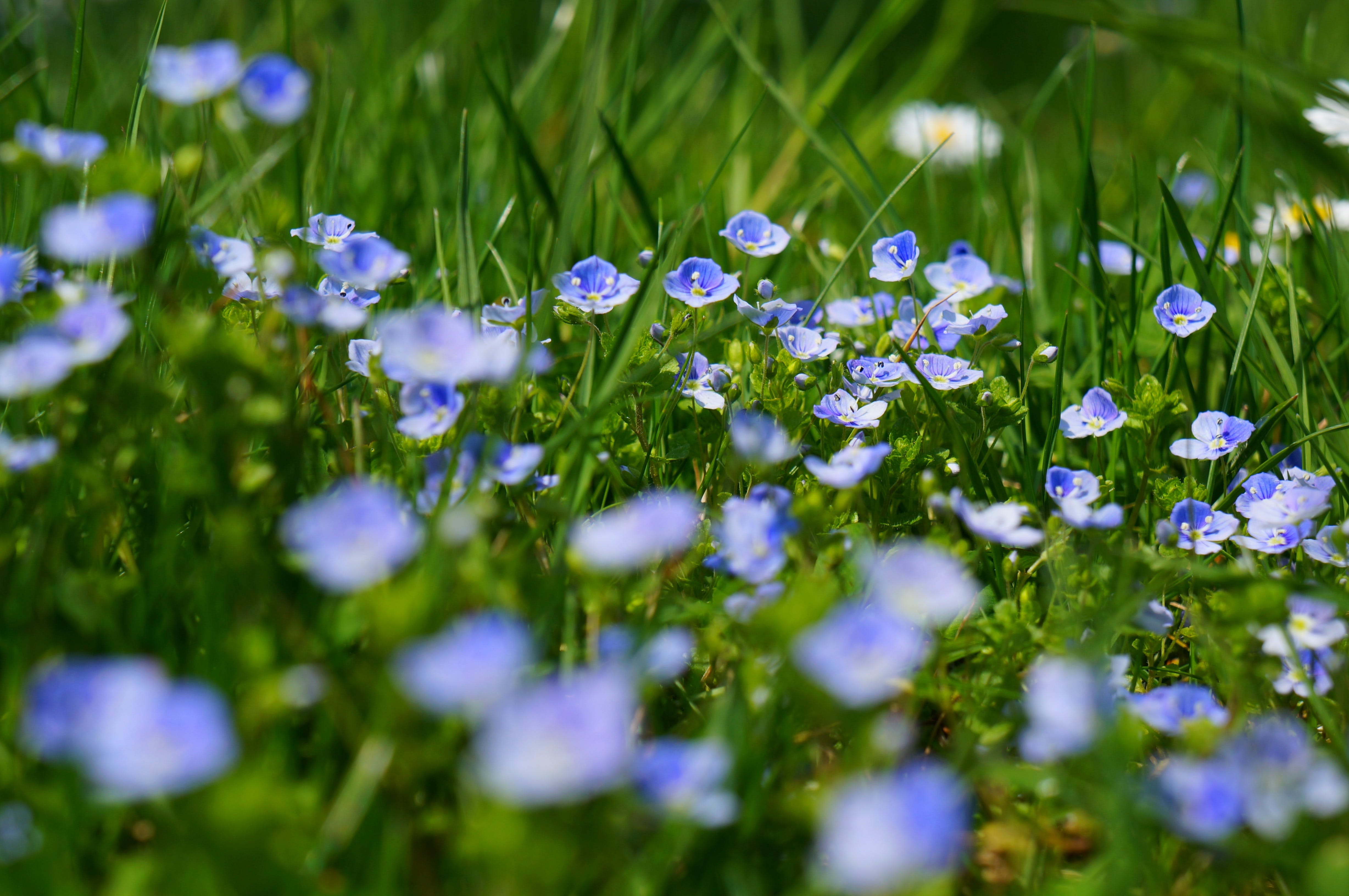 Blue and White Petaled Flowers Macro Photography during Daytime
