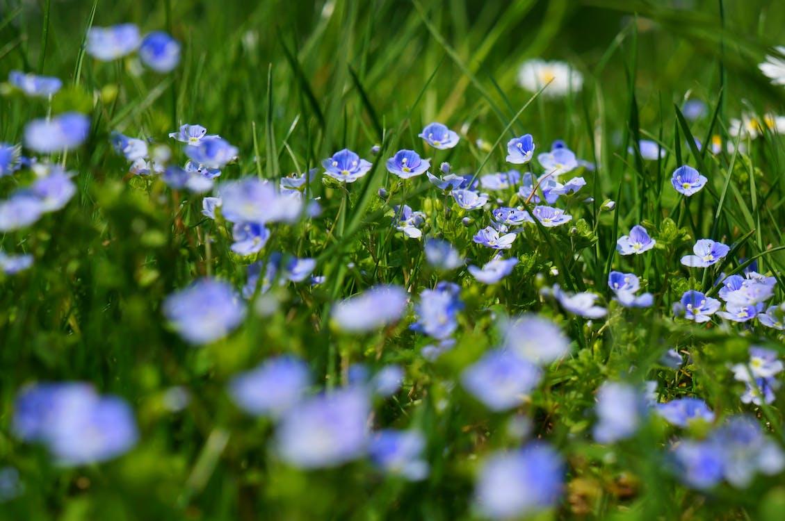 Gündüz Mavi Ve Beyaz Yapraklı çiçekler Makro Fotoğrafçılık