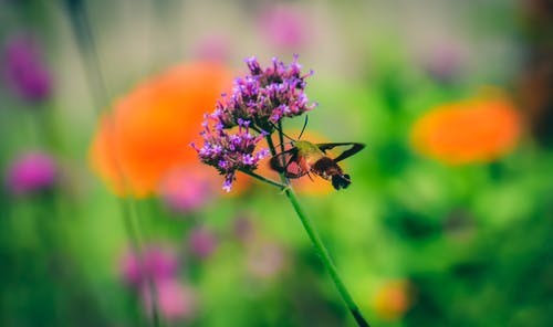 Black and Brown Insect on Purple Flower