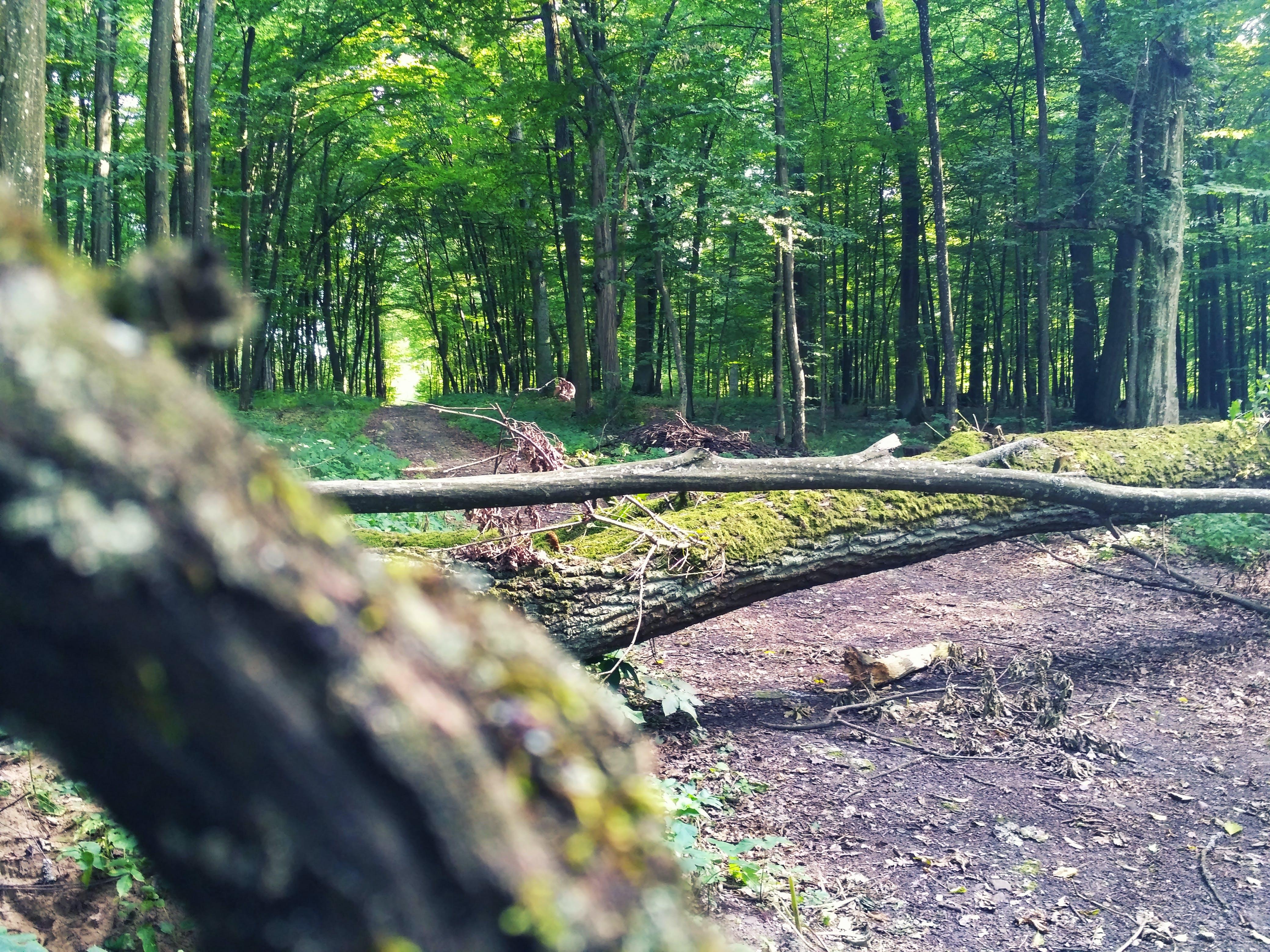 Kostenloses Stock Foto zu bäume, baumstämme, boden, erde
