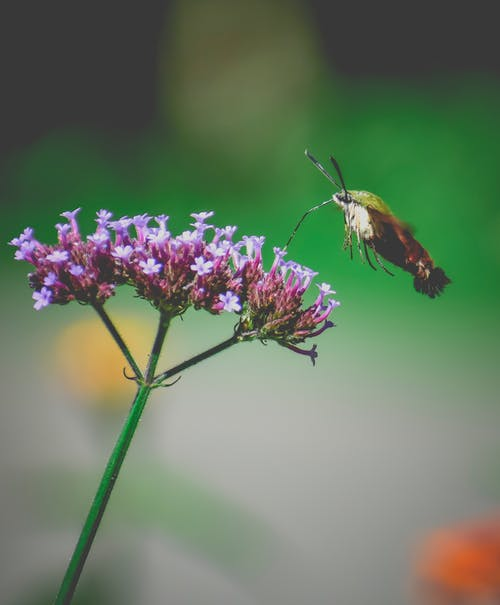 Brown and Black Butterfly Perched on Purple Flower in Close Up Photography