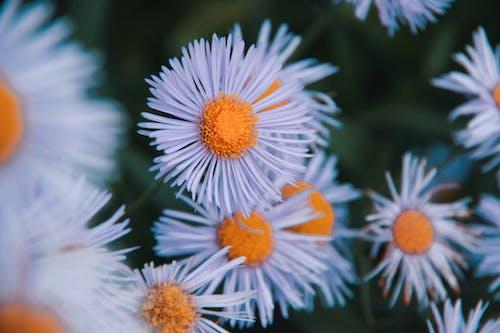 White and Orange Flowers in Tilt Shift Lens