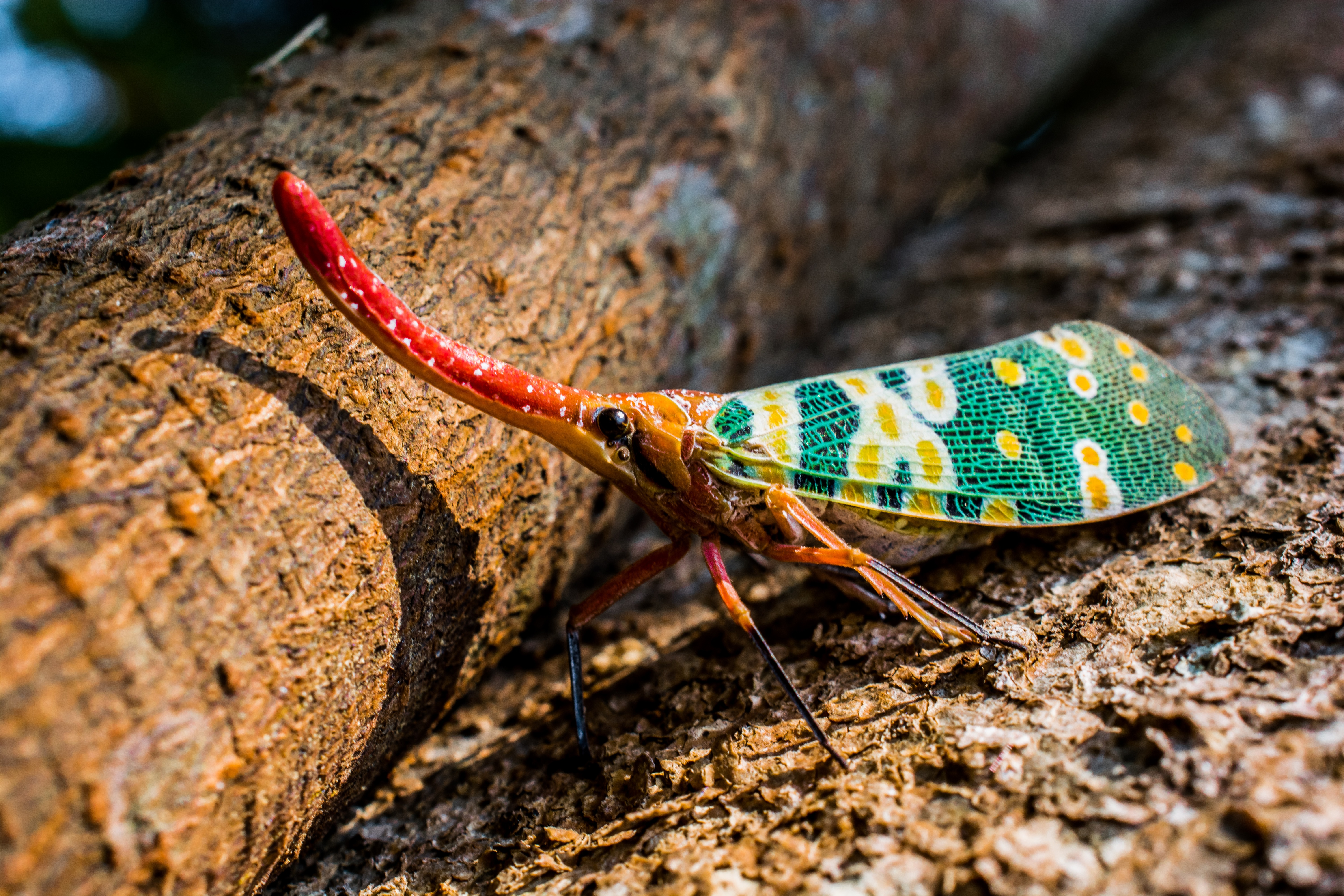 Free stock photo of red, long, colorful, insect