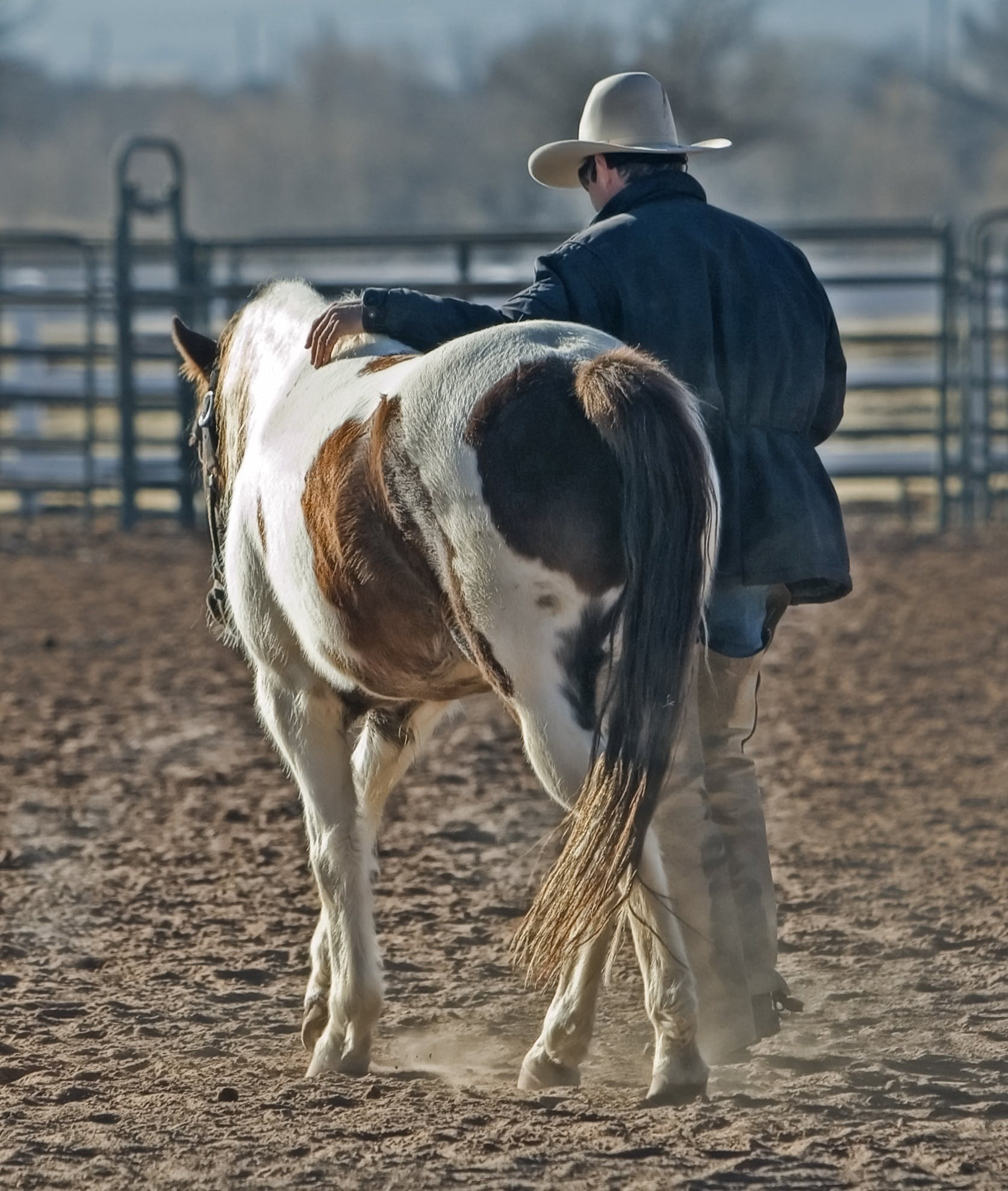 Man Walking With Horse
