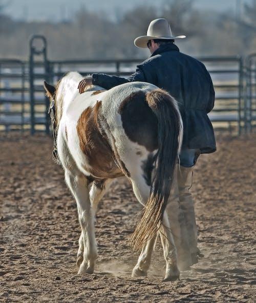 Ảnh lưu trữ miễn phí về cao bồi, chủ trang trại, con ngựa, con vật