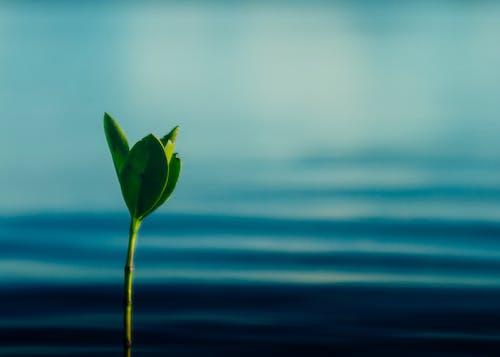 คลังภาพถ่ายฟรี ของ กล้าไม้, น้ำทะเลสีฟ้า, โกงกาง