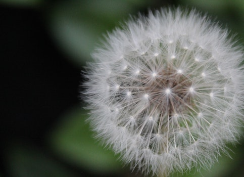 Free stock photo of nature, blur, environment, macro