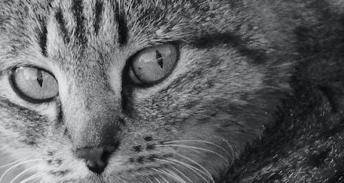 Základová fotografie zdarma na téma domácí zvíře, kočka