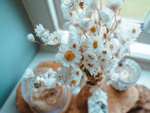 Бесплатное стоковое фото с декорация, зима, Искусство, красивый