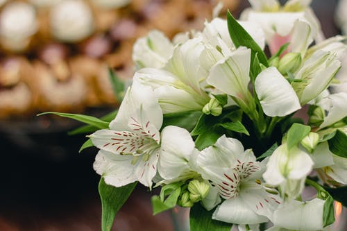 Delicate elegant bouquet with tender white Peruvian lily flowers placed on table before wedding celebration