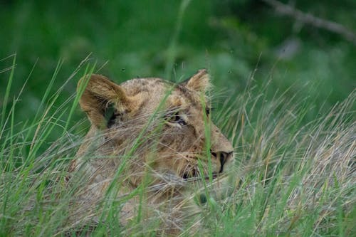 Free stock photo of africa, animal, close up