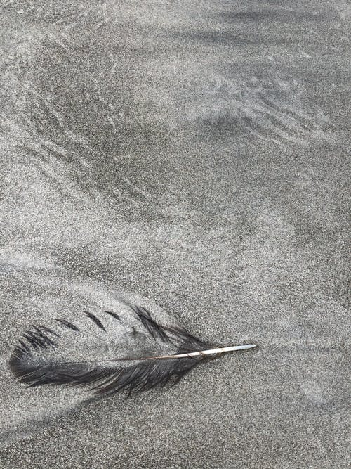 Black Feather on Gray Textile