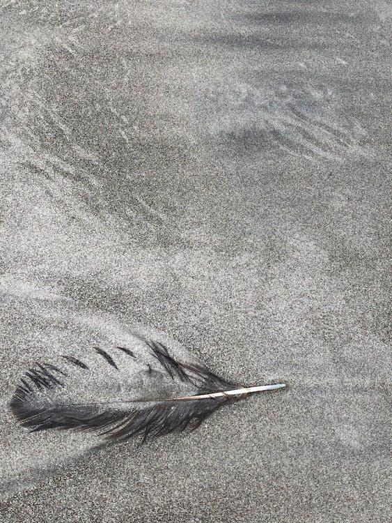 Black Feather on Gray Textile