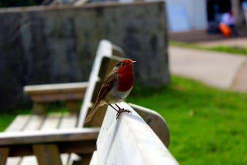 คลังภาพถ่ายฟรี ของ ben nevis, การถ่ายภาพกบฏ johny, ที่ราบสูง, นก
