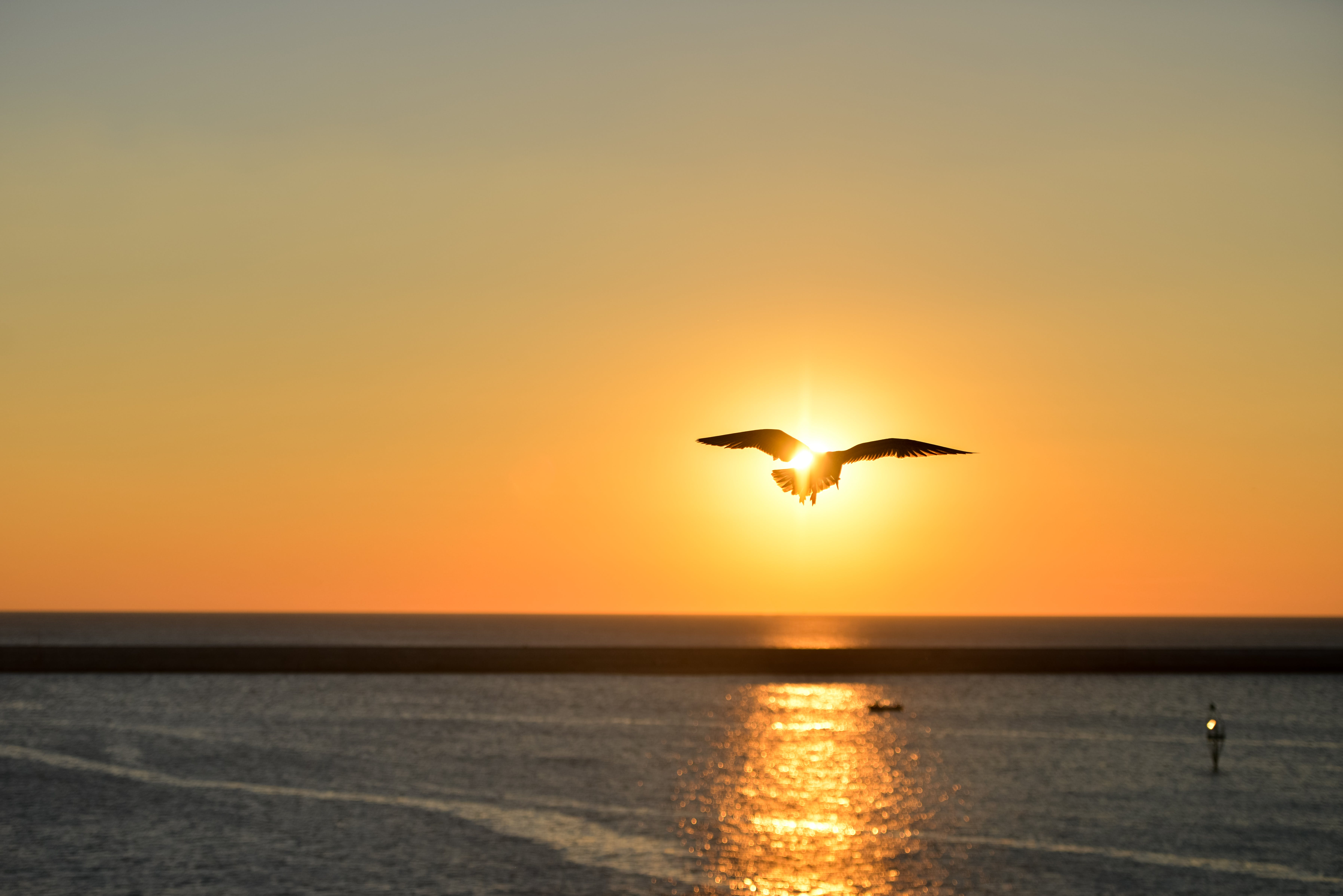 Silhouette of Seagull Flying Above Large Body of Water during Sunset