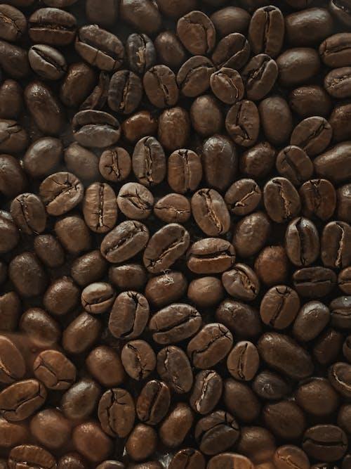 Foto profissional grátis de bebida, cafeína, castanho