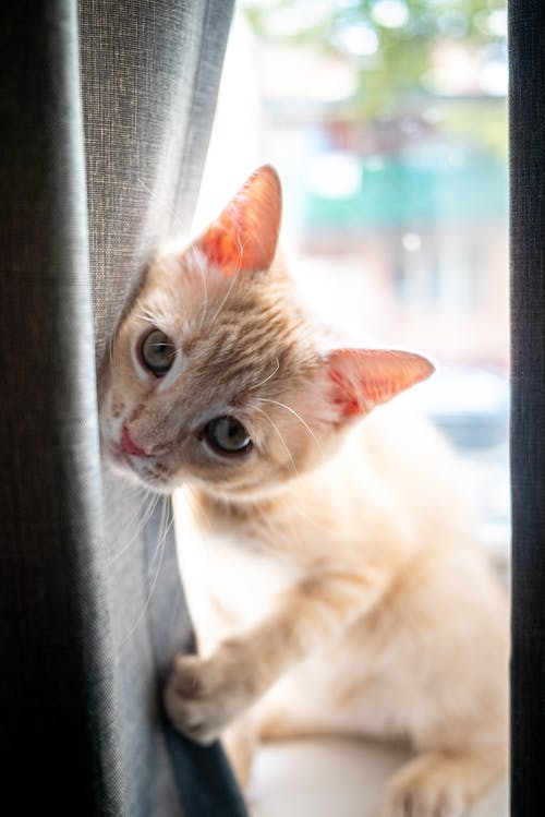 White and Brown Cat on Window