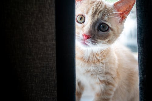 Free stock photo of cat, cats, kitten