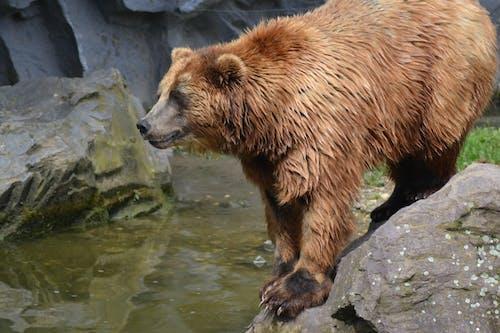 Foto profissional grátis de água, ursos