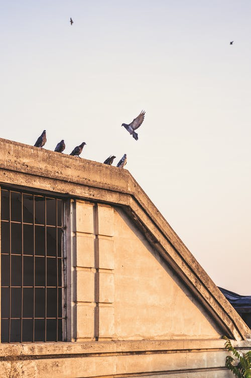 Birds sitting on roof of building