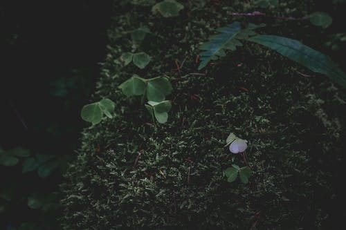 Small green leaves of plant in forest