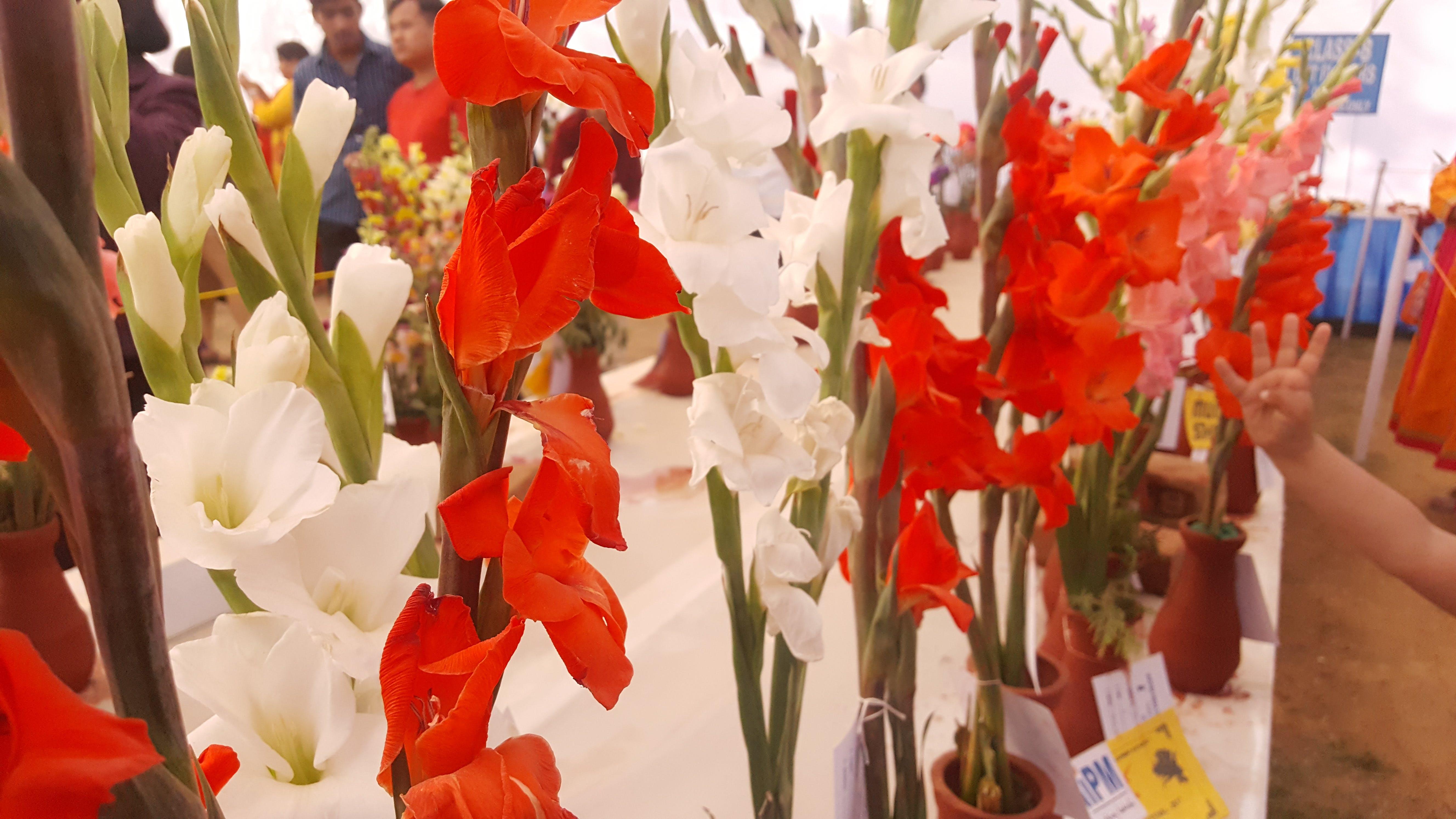 Free stock photo of beautiful, bloom, blossom, botany
