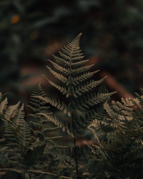 Immagine gratuita di alba, albero, autunno, cadere
