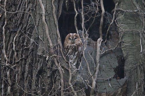 Foto profissional grátis de animais selvagens, ao ar livre, ave