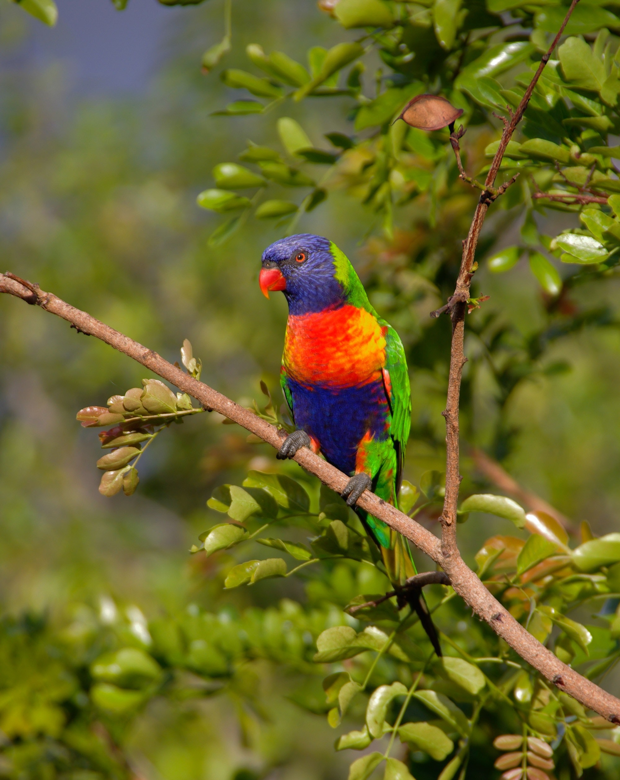 44 Colorful Parrot Photos 183 Pexels 183 Free Stock Photos