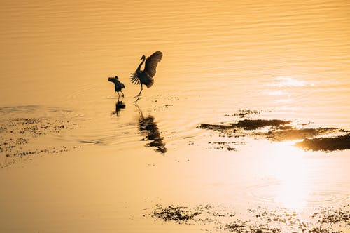 Silhouette of Birds on a Lake