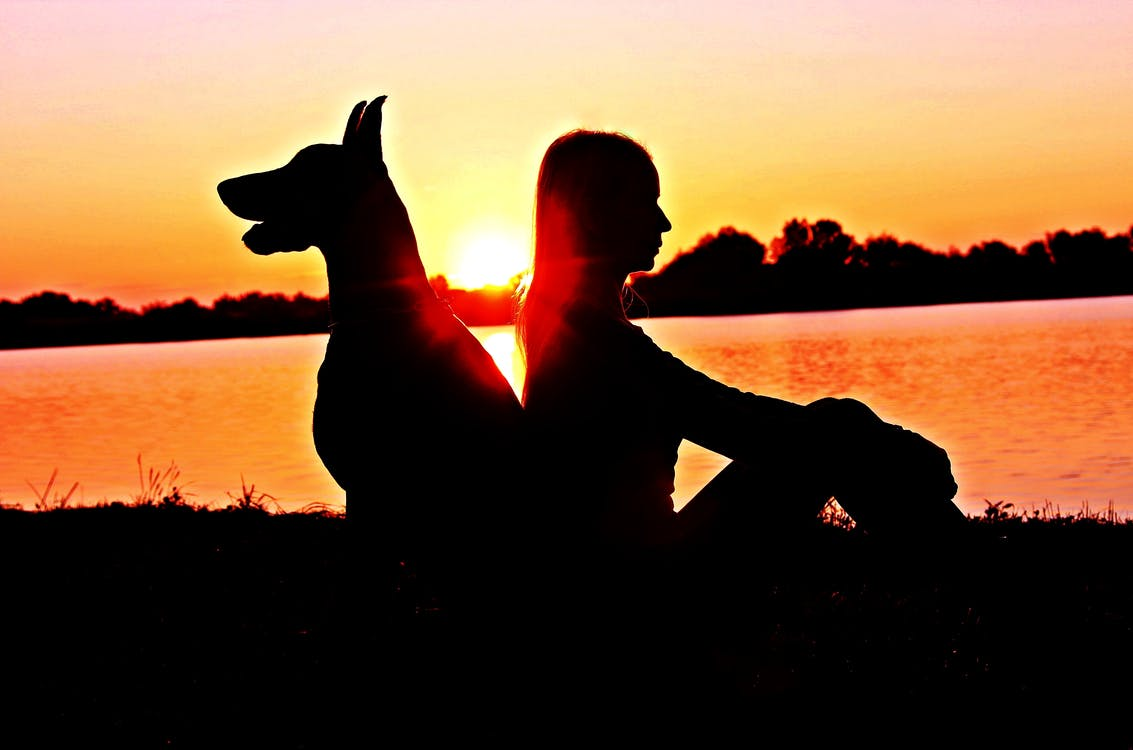 Silhouette of Woman and Doberman Pinscher Sitting Back-to-back during Sunset