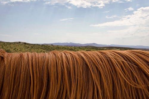 Brown Hays Under White Sky