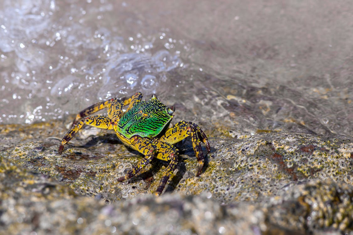 Green and Brown Crab on Gray Rock