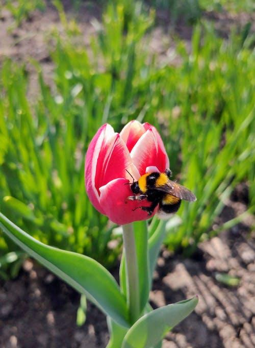 açık hava, alan, arı içeren Ücretsiz stok fotoğraf