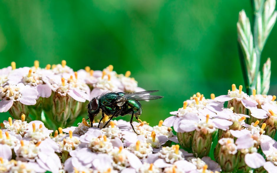 New free stock photo of flowers, insect, macro