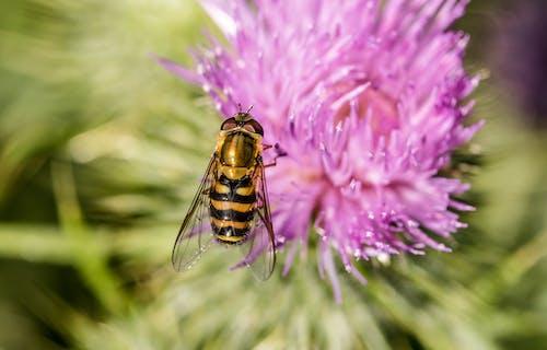 Immagine gratuita di bocciolo, fiore, flora, impollinazione