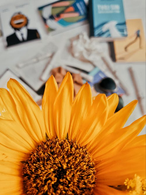 Yellow Sunflower on White Printer Paper