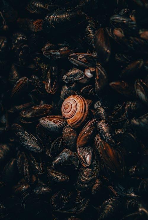 Brown and Black Sea Shells