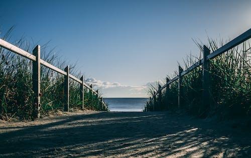 Green Grass Near Sea Under Blue Sky