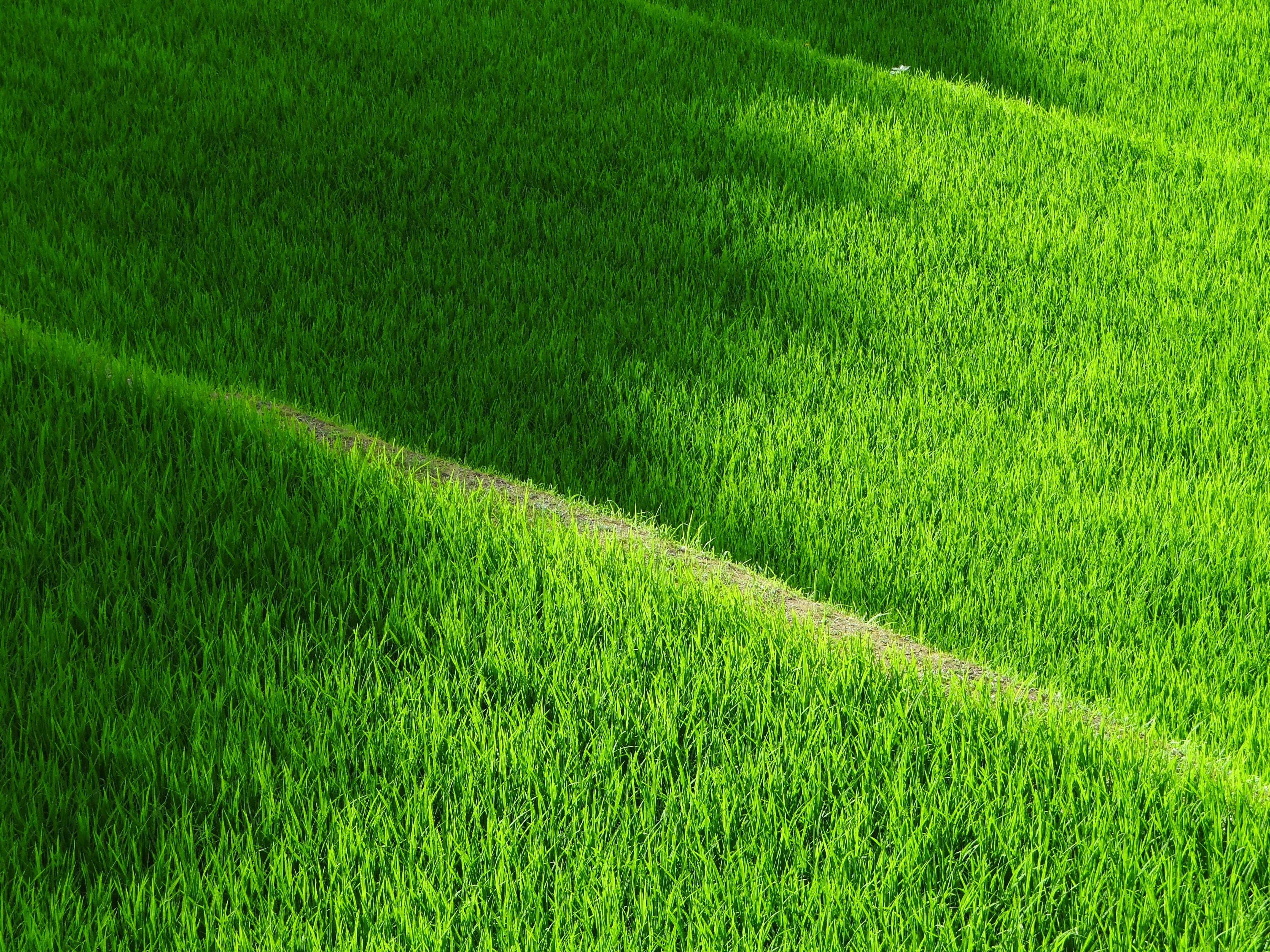 Kostenloses Stock Foto zu bauernhof, feld, gras, grün