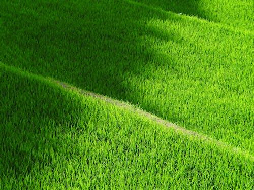 Ingyenes stockfotó farm, fű, mező, ösvény témában