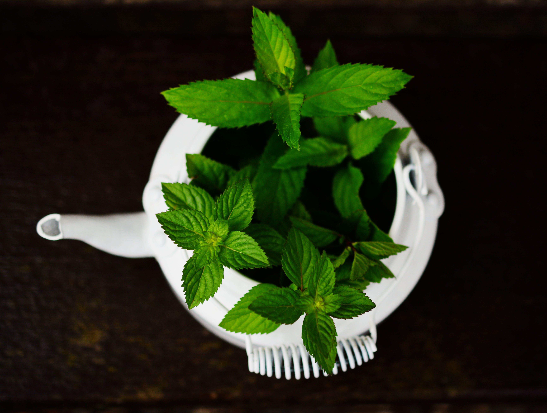 baharat, bitkisel, büyüme, çaydanlık içeren Ücretsiz stok fotoğraf