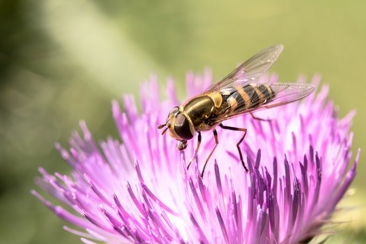Free stock photo of flower, bee, pollen, insect
