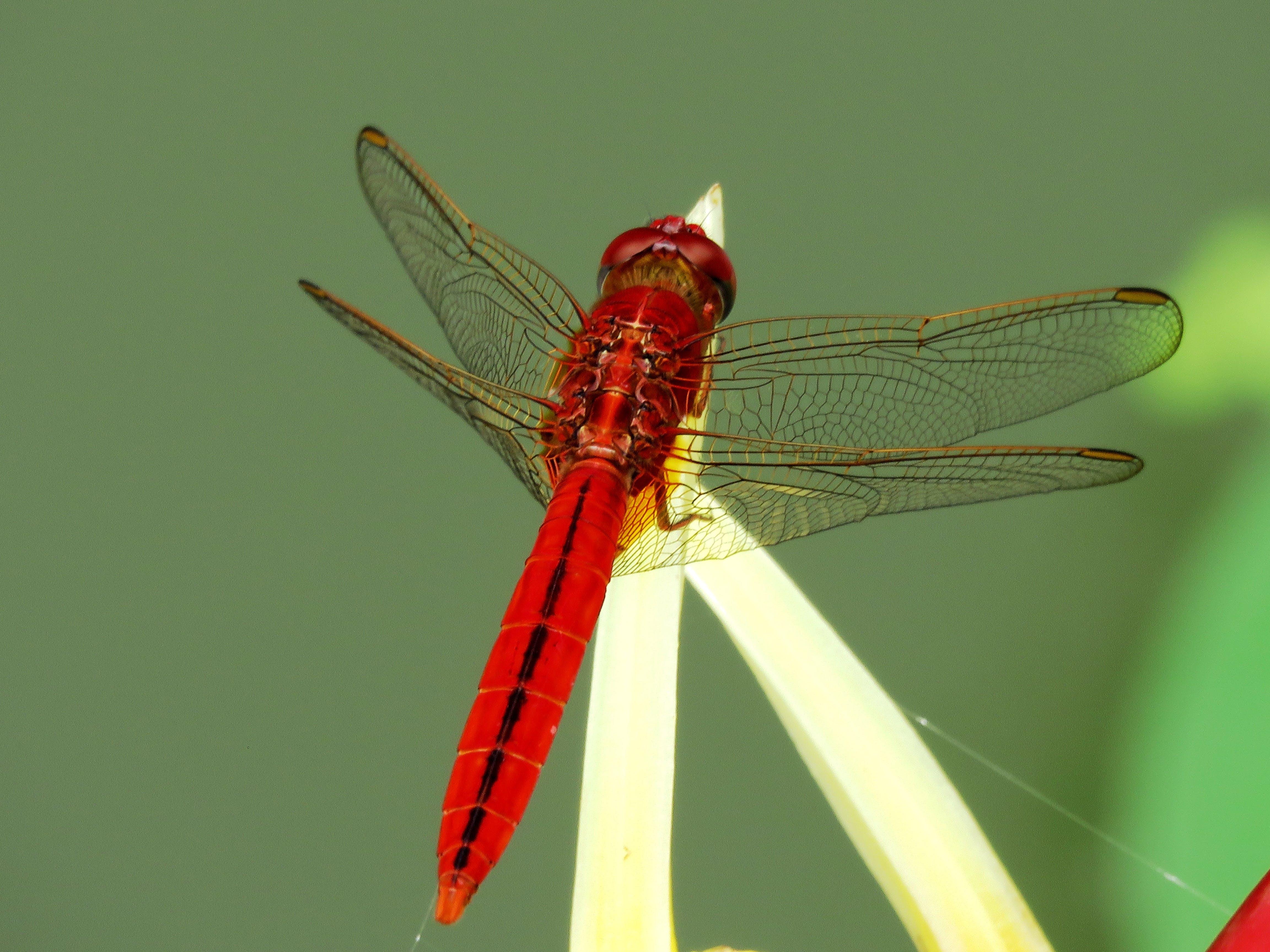 Free stock photo of nature, red, yellow, animal