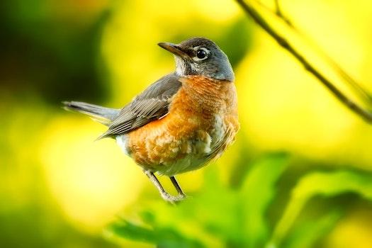 Free stock photo of bird, animal, macro, wildlife